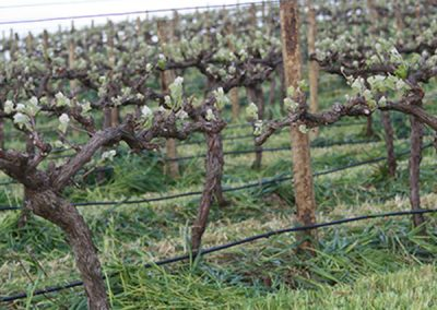 Full Vineyard Management 04