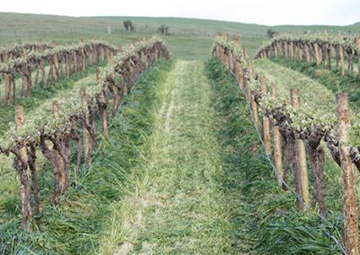 Mowing Vineyards 01